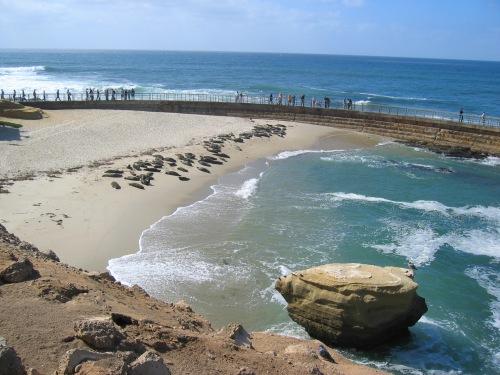 LaJolla_beach_seals